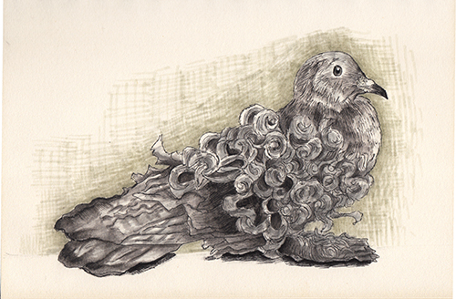 Frillback Pigeon drawing by Naomi. (Bird series)